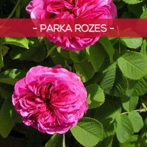 Parka rozes